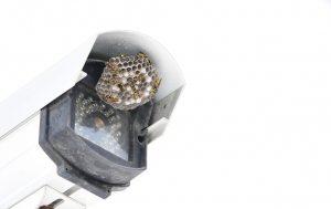 Wasp nest on camera equipment